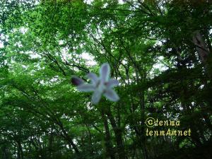 tenmaphoto0021.jpg