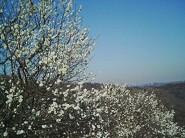 梅の里 3