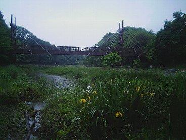 izumino mori shirakashi no ike2