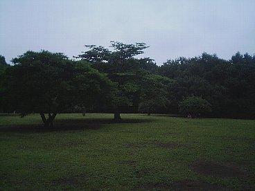 higashitakane shinrin 4