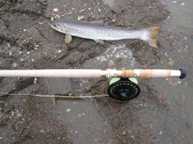スペイ初め魚P1000595