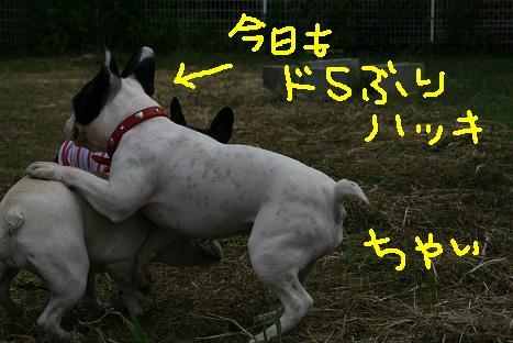 2008081057.jpg