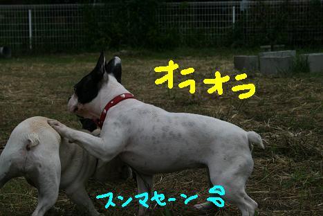 2008081058.jpg