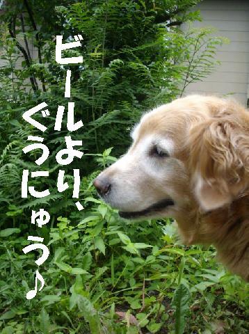 gunyu