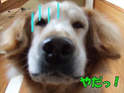 ウィーくん(2)8歳 茨城県