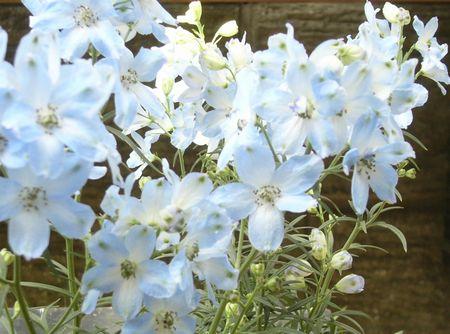 青の寄せ植え