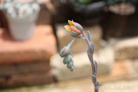 T's Garden Healing Flowers‐サキュレント