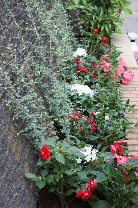 T's Garden Healing Flowers‐夏花壇の植え込み