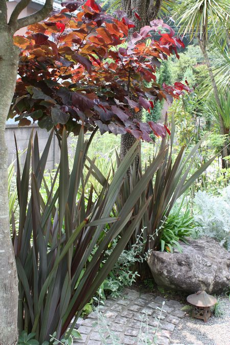 T's Garden Healing Flowers‐