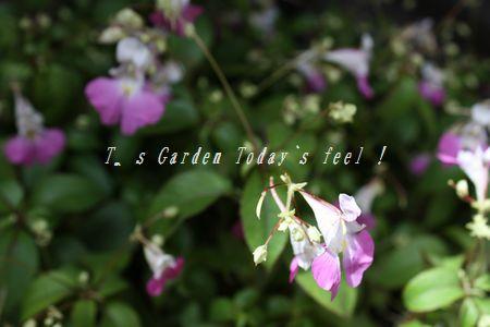 T's Garden Healing Flowers‐源平ツリフネソウ