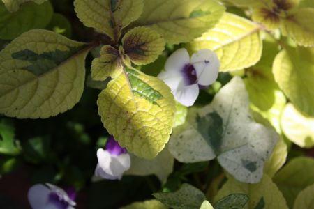 T's Garden Healing Flowers‐寄せ植え