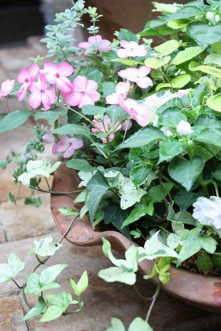 T's Garden Healing Flowers‐インパチェンスの寄せ植え