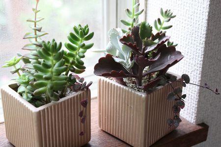 T's Garden Healing Flowers‐多肉寄せ植え