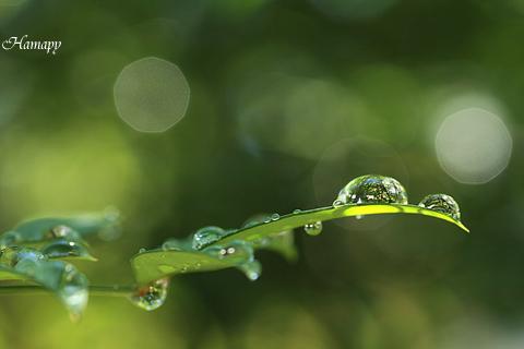 水玉の中の小さな森