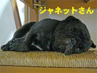 200607canp62.jpg