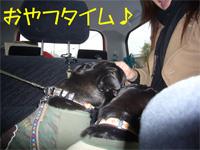 20061125takibi37.jpg