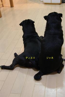 20070924_1.jpg