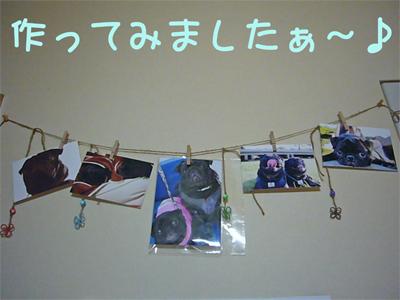 20080205_1.jpg