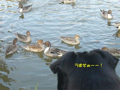 20080414_3.jpg