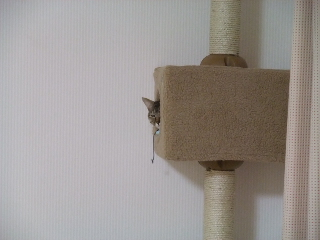 the_housekeeper_saw.jpg