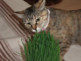 weed_2.jpg