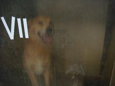 012収容犬