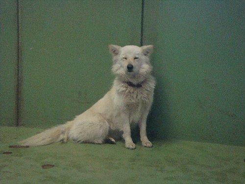 020白い犬