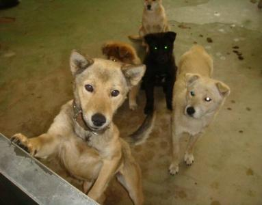 055子犬たち