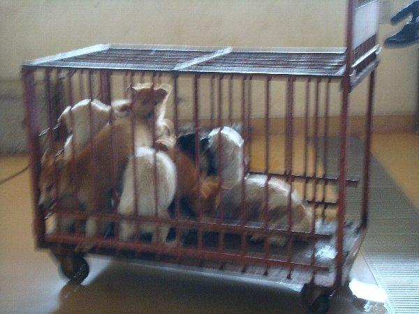 065詰め込まれている子犬たち