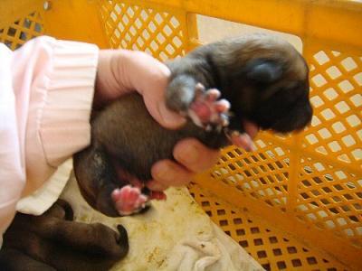078生まれたばかりの子犬