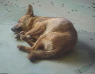 058子犬