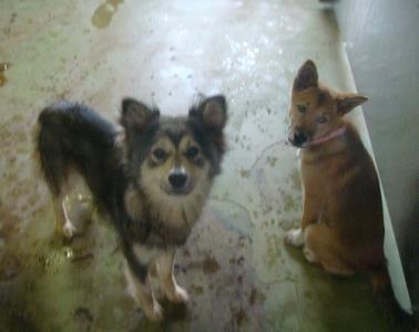 022収容犬