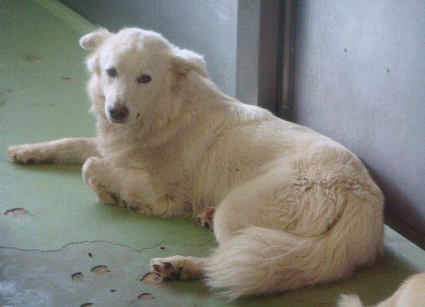 051白い犬ー1