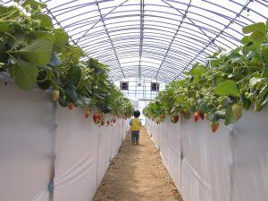 farmer4.jpg