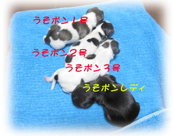 yuzu-1.jpg