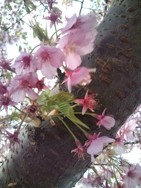 風で花びらが飛び散りそうでした