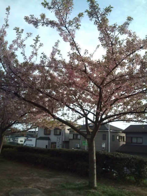 桜が咲いています。青い葉も見えます