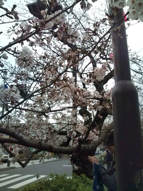 咲いている木も増えてきました