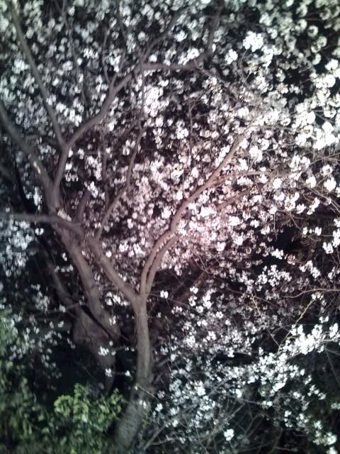 夜桜20100331