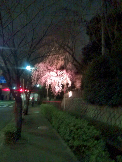 夜桜20100331①