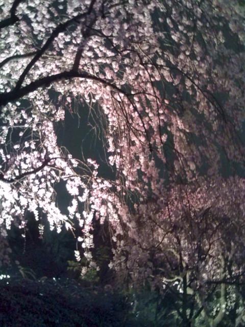 夜桜20100331⑥