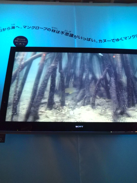 3D画面で見る美ら海