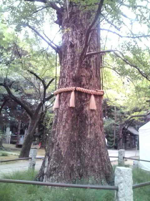 氷川神社の大木