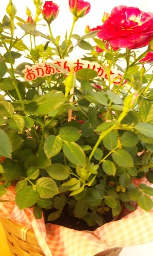 100512flower.jpg