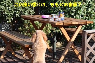 IMG_5447_convert_20100301132839.jpg