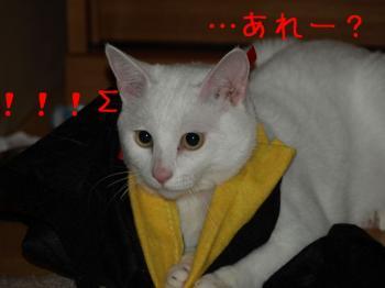 5_20080929223111.jpg