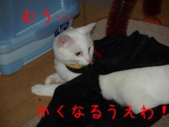 8_20080929223146.jpg