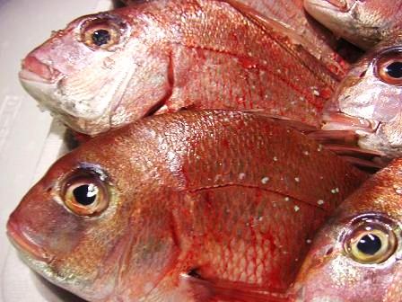 鯛 (3)