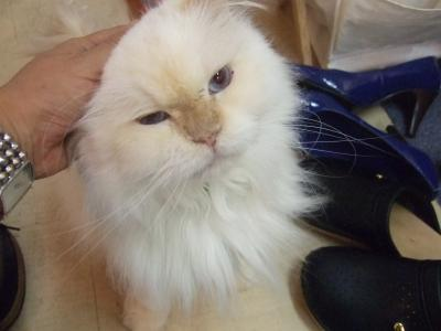 ノート57+003_convert_20090719144920