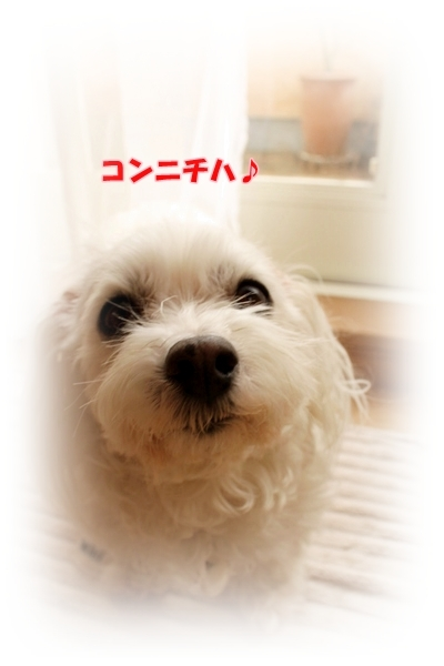 IMG_2842_20100226223642.jpg